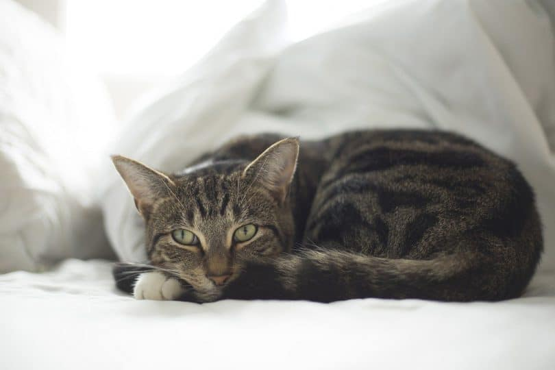 cbd for cats-effect