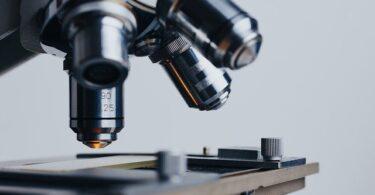 Drug tests negative after consumption of CBD oil